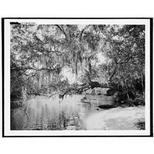 On the Tomoka River: Home & Kitchen