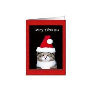 Funny Christmas Card, Cat in Santa Hat on black and red Card