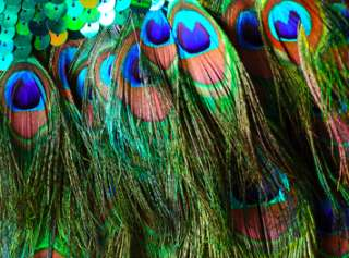 CHARISMATICO GREEN PAGEANT TRANSVESTITE DRAG QUEEN Feather PEACOCK