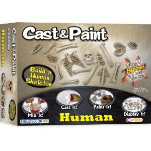 Cast and Paint Human Skeleton Kit with BLOpens Toys