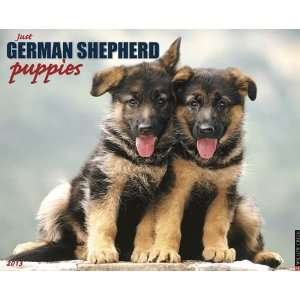 German Shepherd Puppies 2013 Wall Calendar Office
