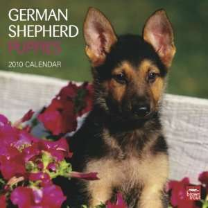 German Shepherd Puppies 2010 Wall Calendar Office