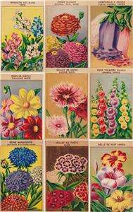 Vintage French Flower Seed Labels 24 Different (Set 2)