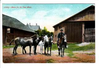 Old Coal Miners Mines Mules Mining Donkeys Postcard