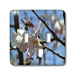 WhiteOak Photography Floral Prints   Cherry Blossom A flowering tree